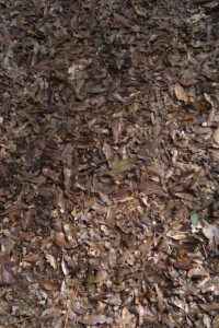 Ground covered with leaves