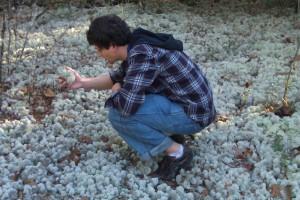 I'm lichen it.